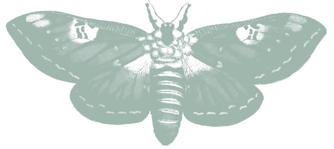 mint green vintage illustration of moth